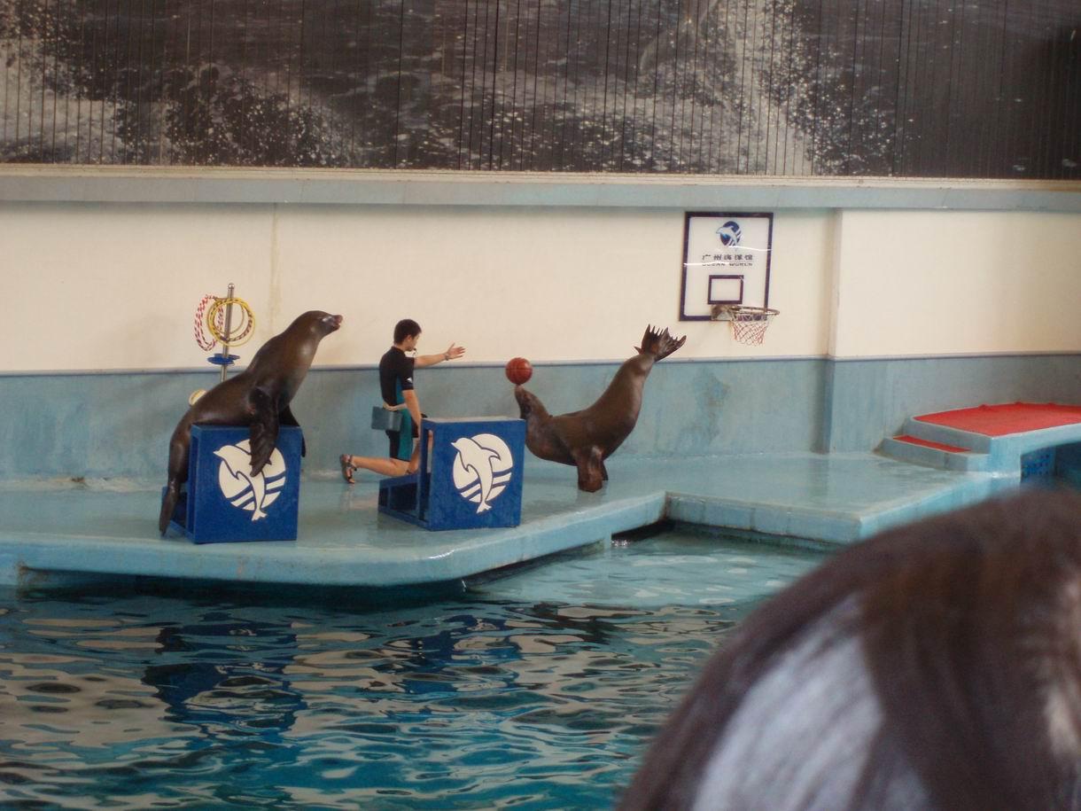 广州海洋馆看海豚表演